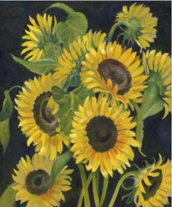 Wiltshire Landscapes Sunflowers